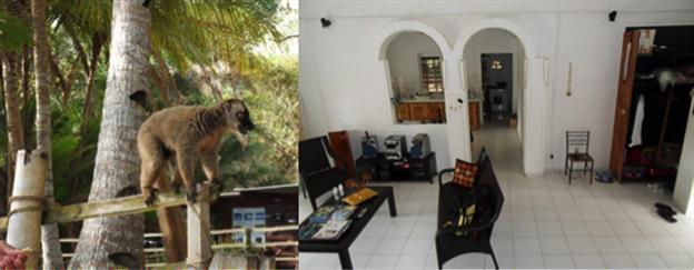 Mayotte-troca-de-casa-animais-casa-incomum