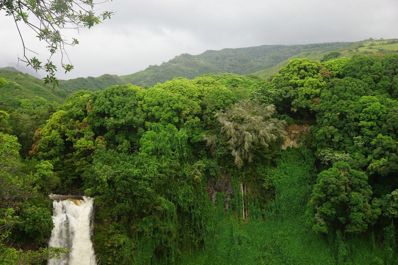 hawaii-1926878_1280